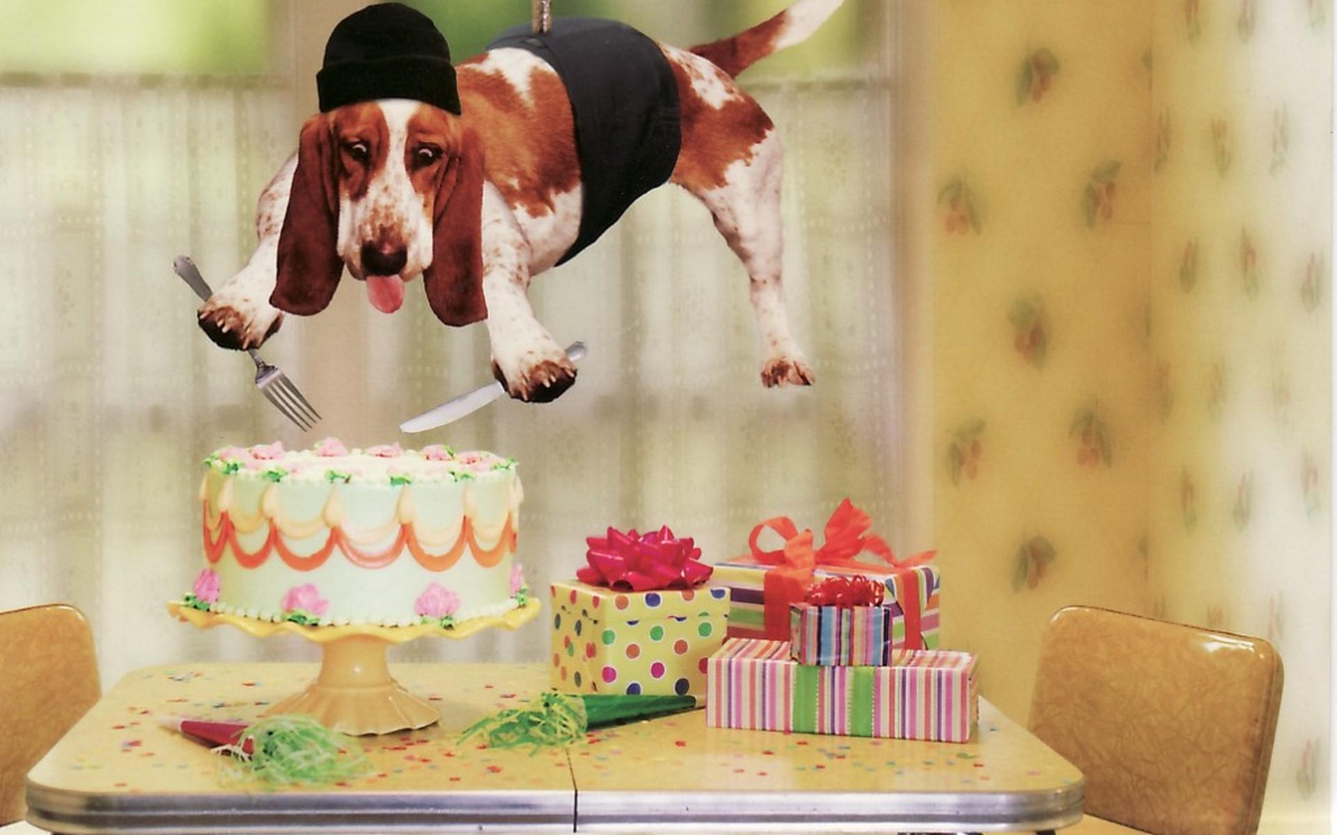 Fotos graciosas de perros - 1920x1200