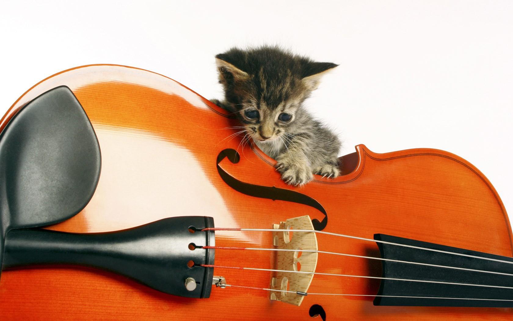 Gatito y violín - 1680x1050