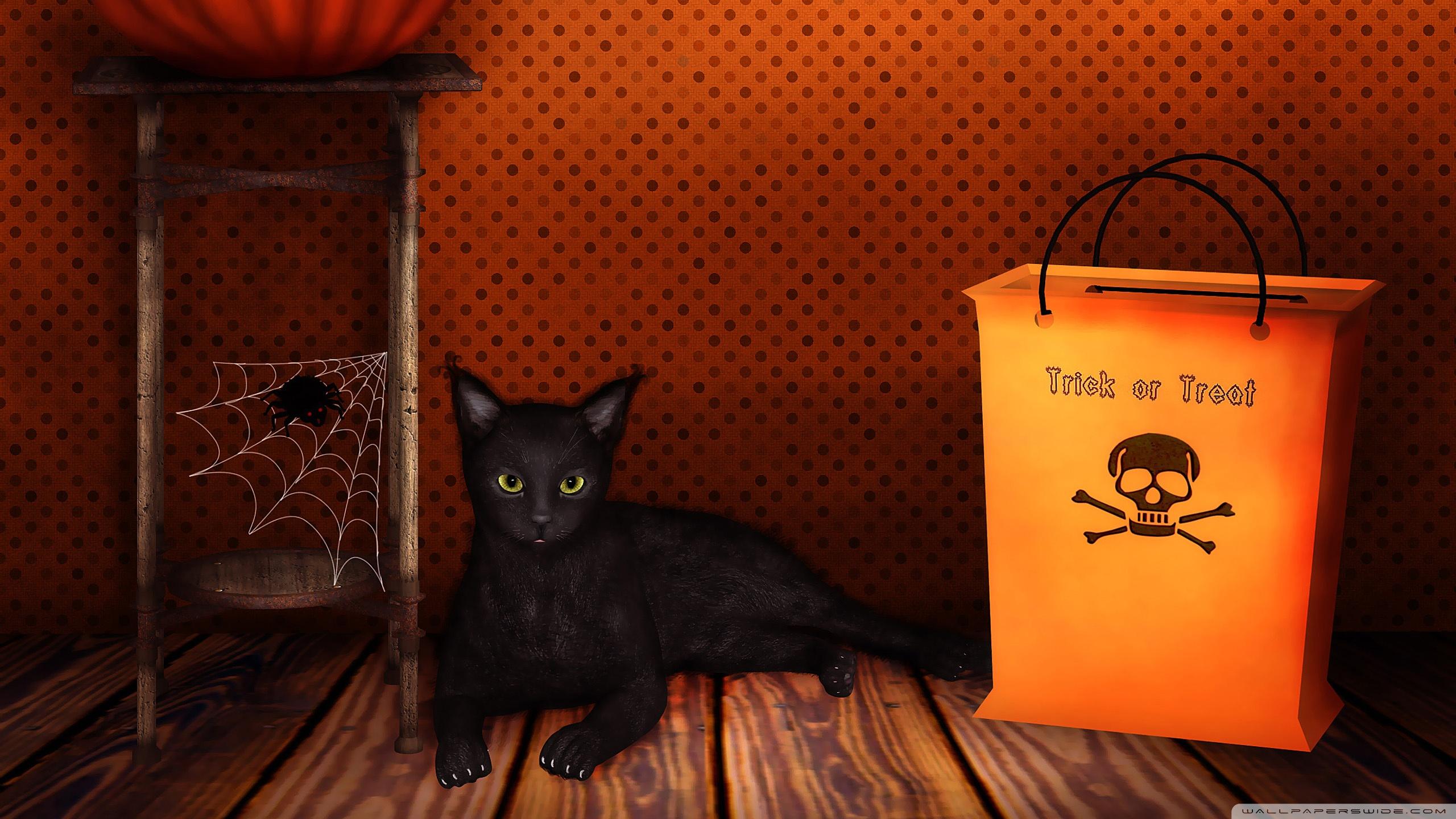 Gato negro de halloween - 2560x1440