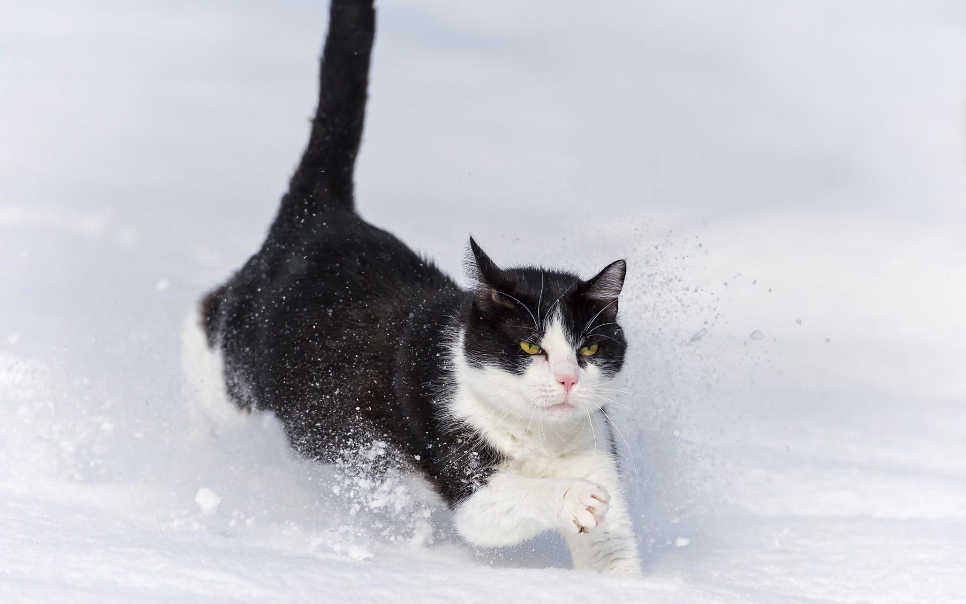 Gato saltando en la nieve - 1920x1200