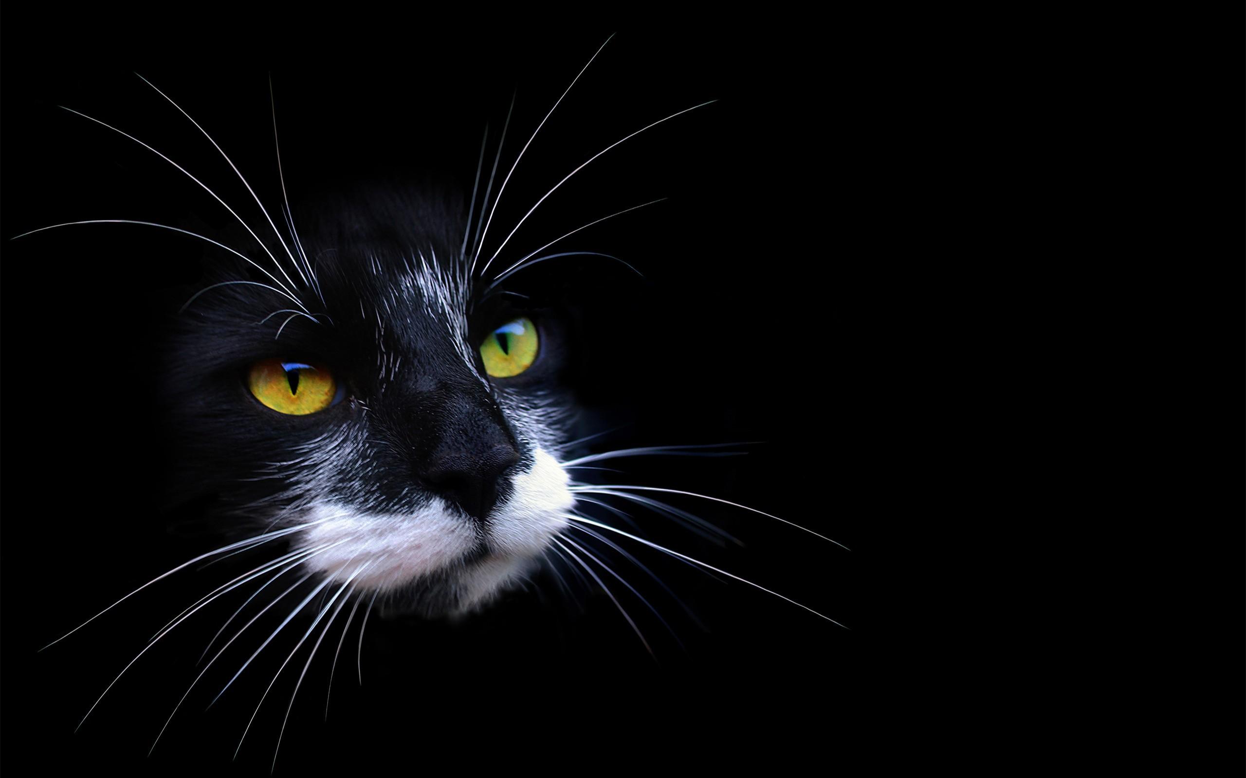 Gato y fondo negro - 2560x1600