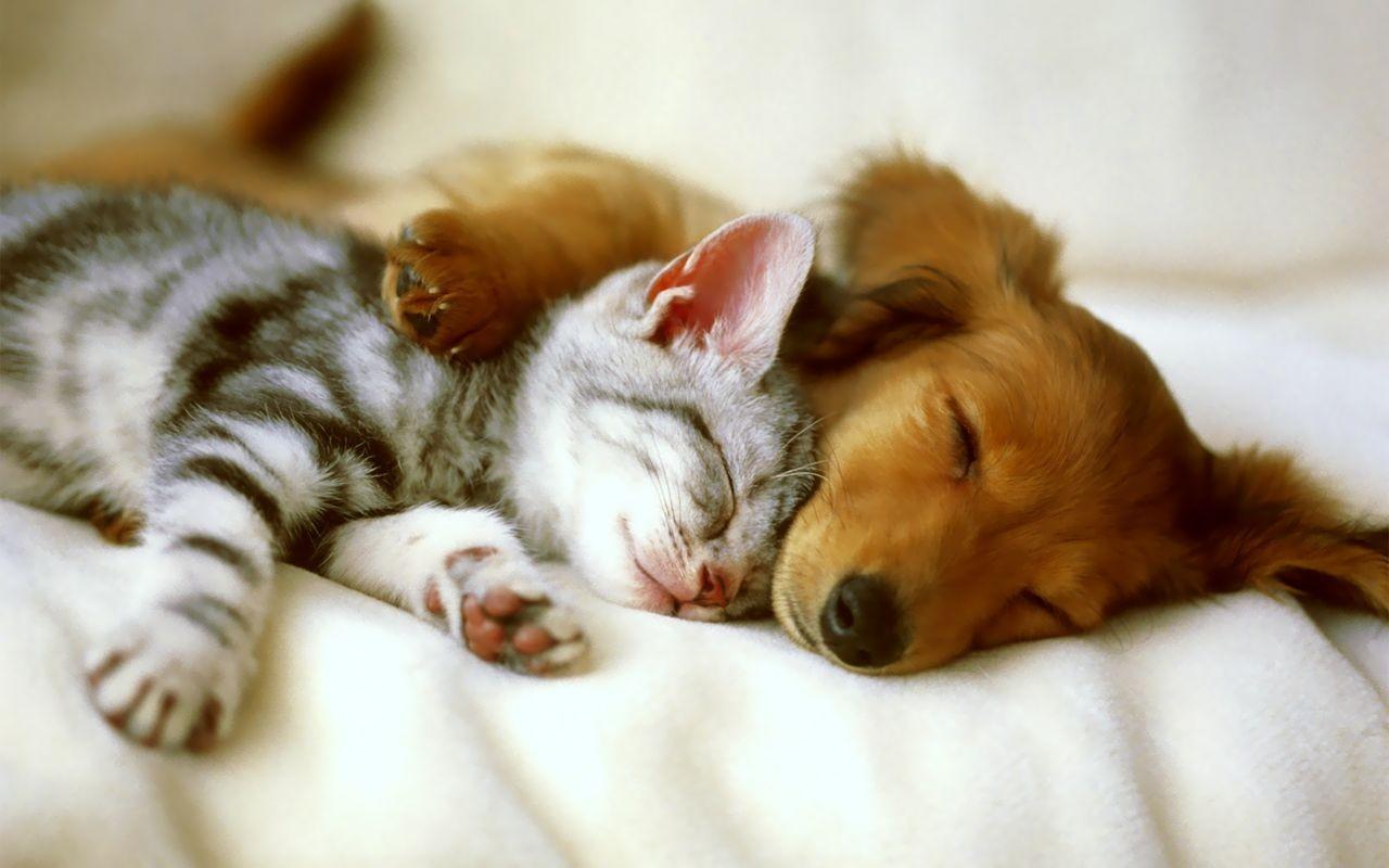 Gato y perro durmiento - 1280x800