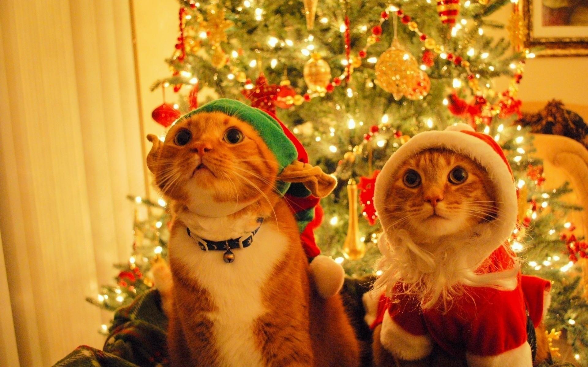 Gatos con gorras de navidad - 1920x1200