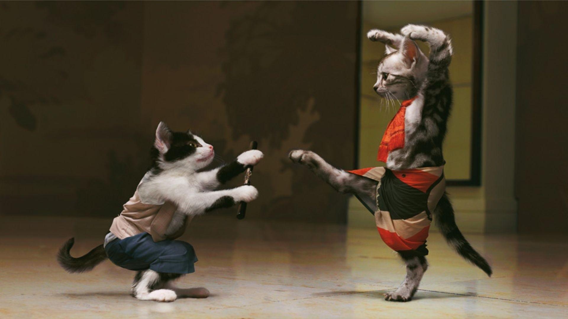 Gatos practicando Kung Fu - 1920x1080