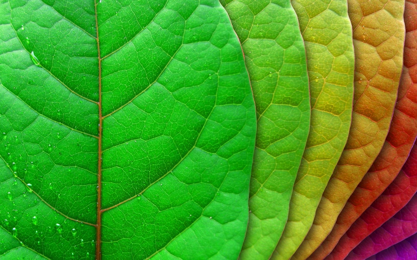 Hojas de árbol de colores - 1680x1050