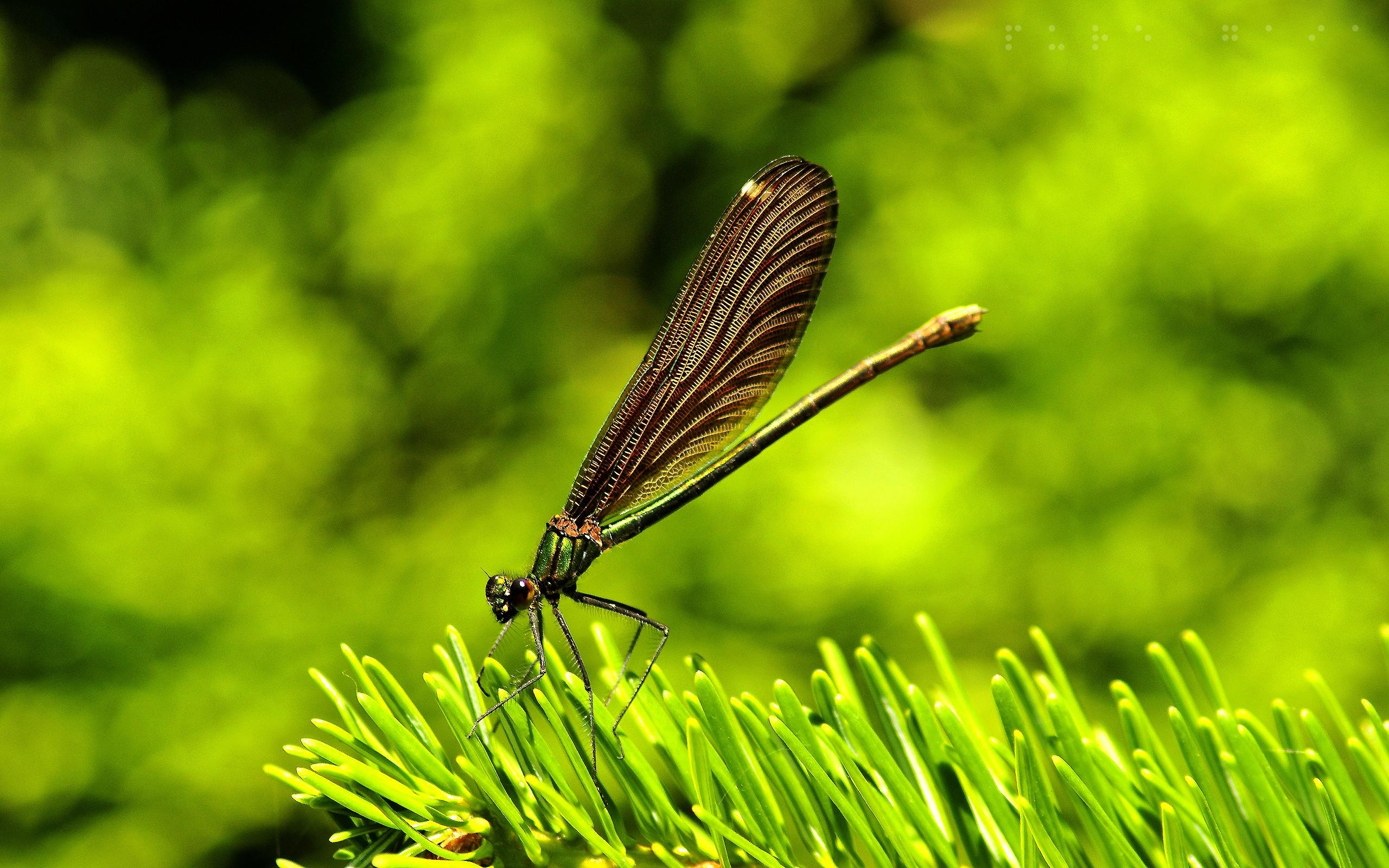 Insectos en la naturaleza - 2560x1600