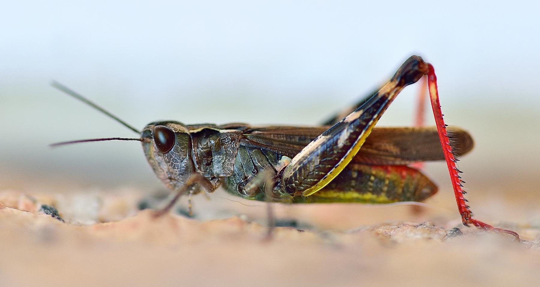 Insectos en macro - 1800x956