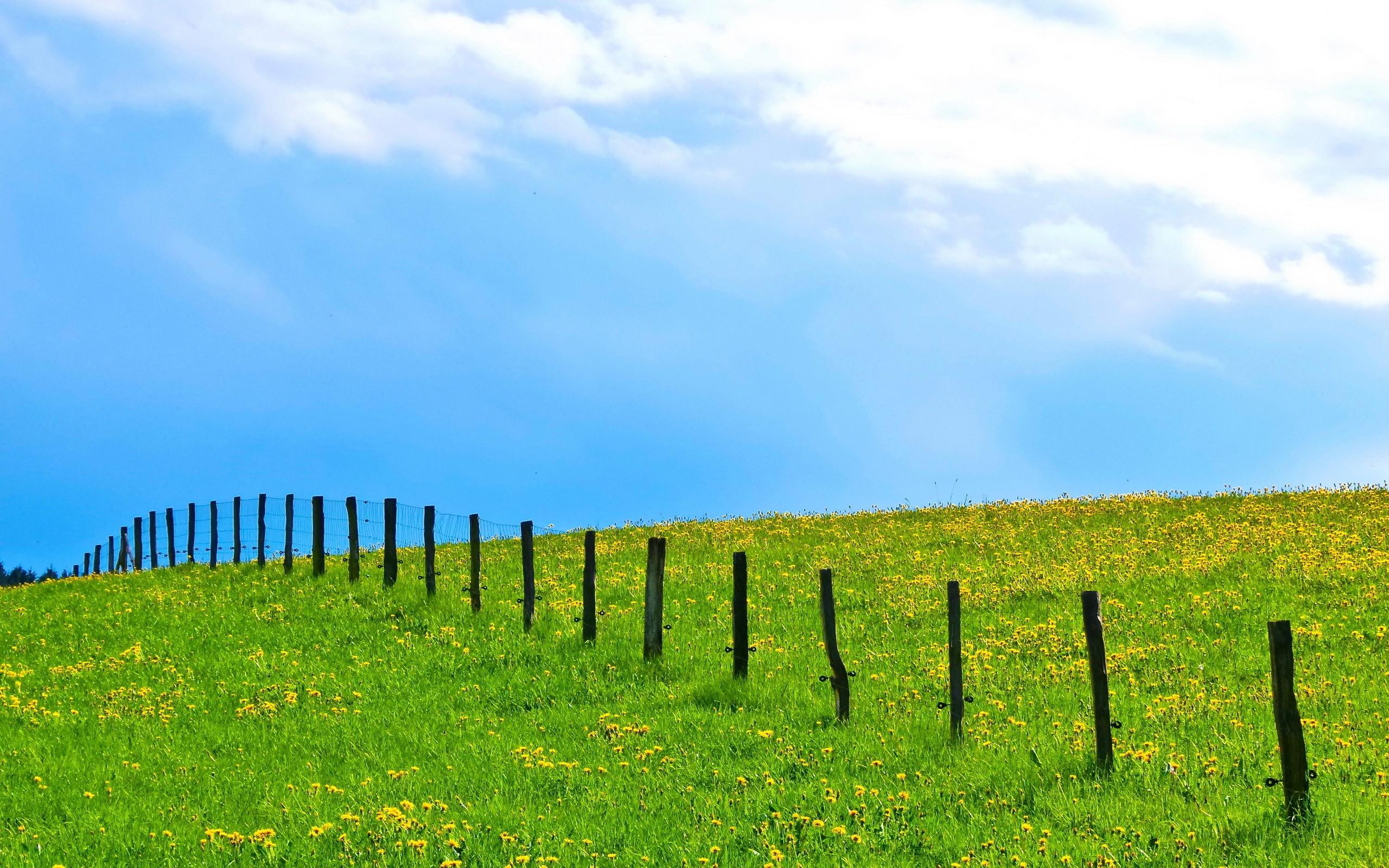 Jardines con flores y grass verde - 2560x1600