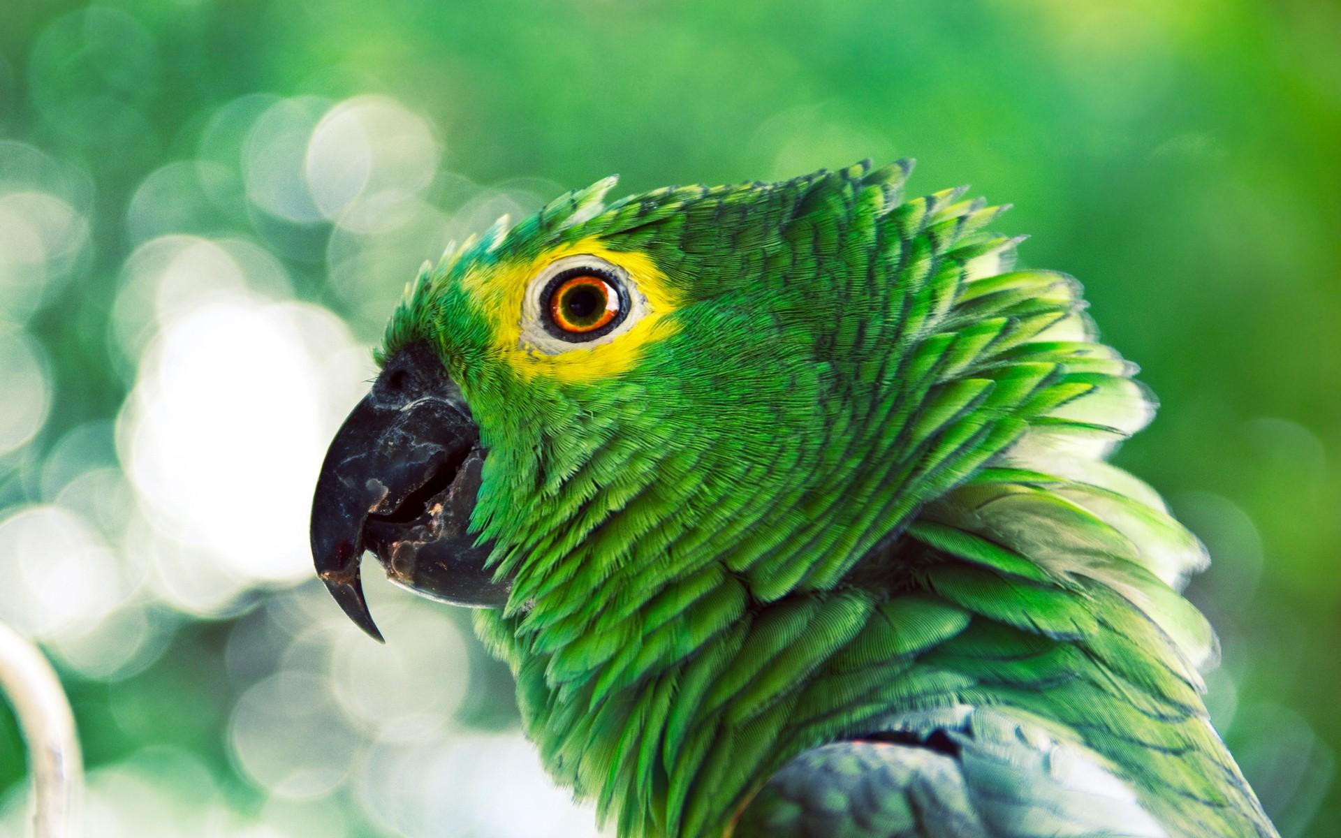 La cabeza de un loro verde - 1920x1200
