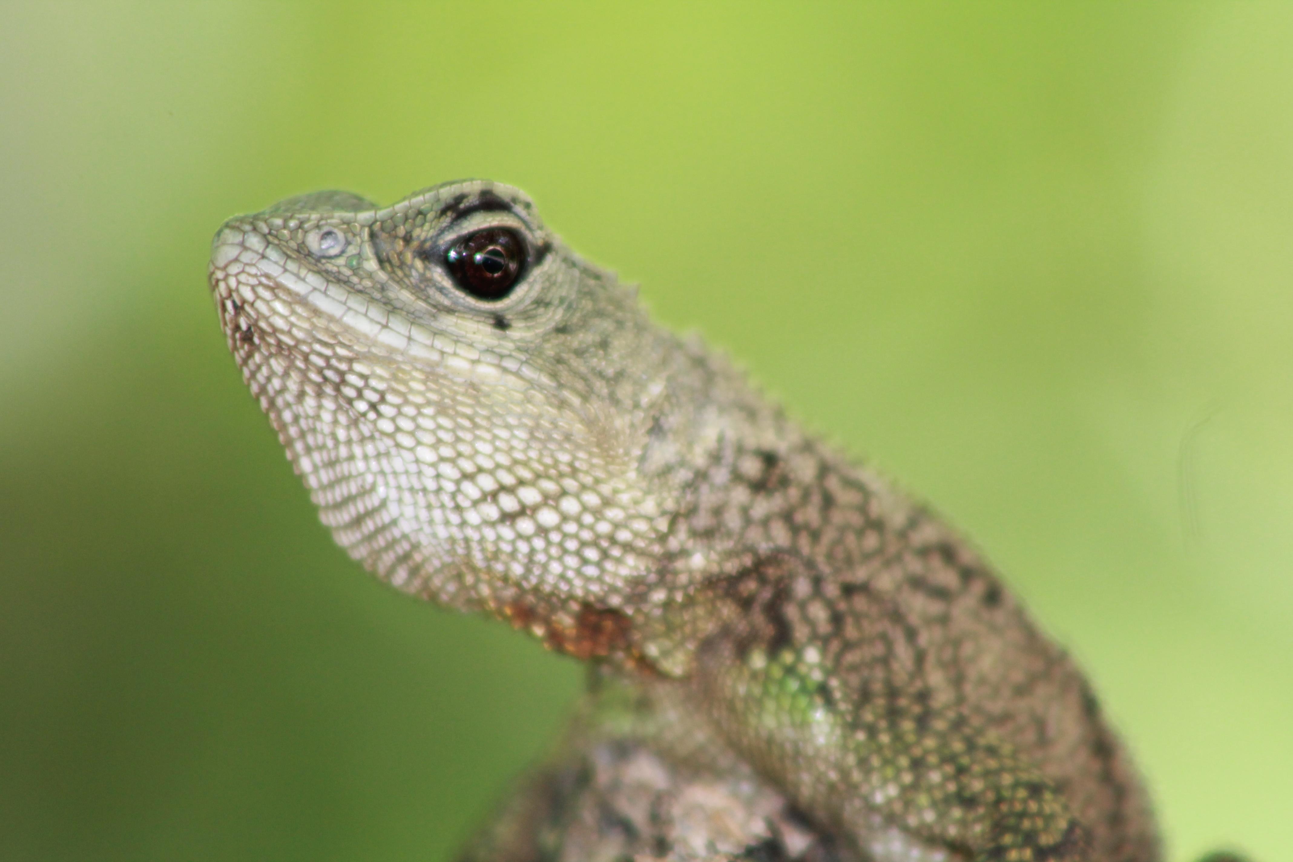 La cabeza de un reptil - 4272x2848