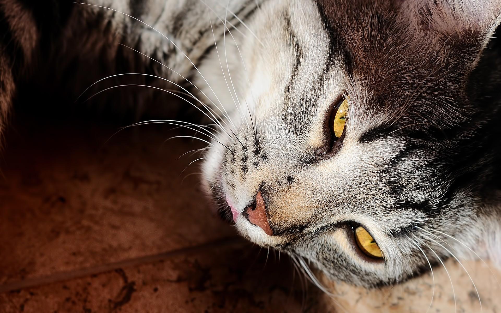 La mirada de un gato - 1920x1200