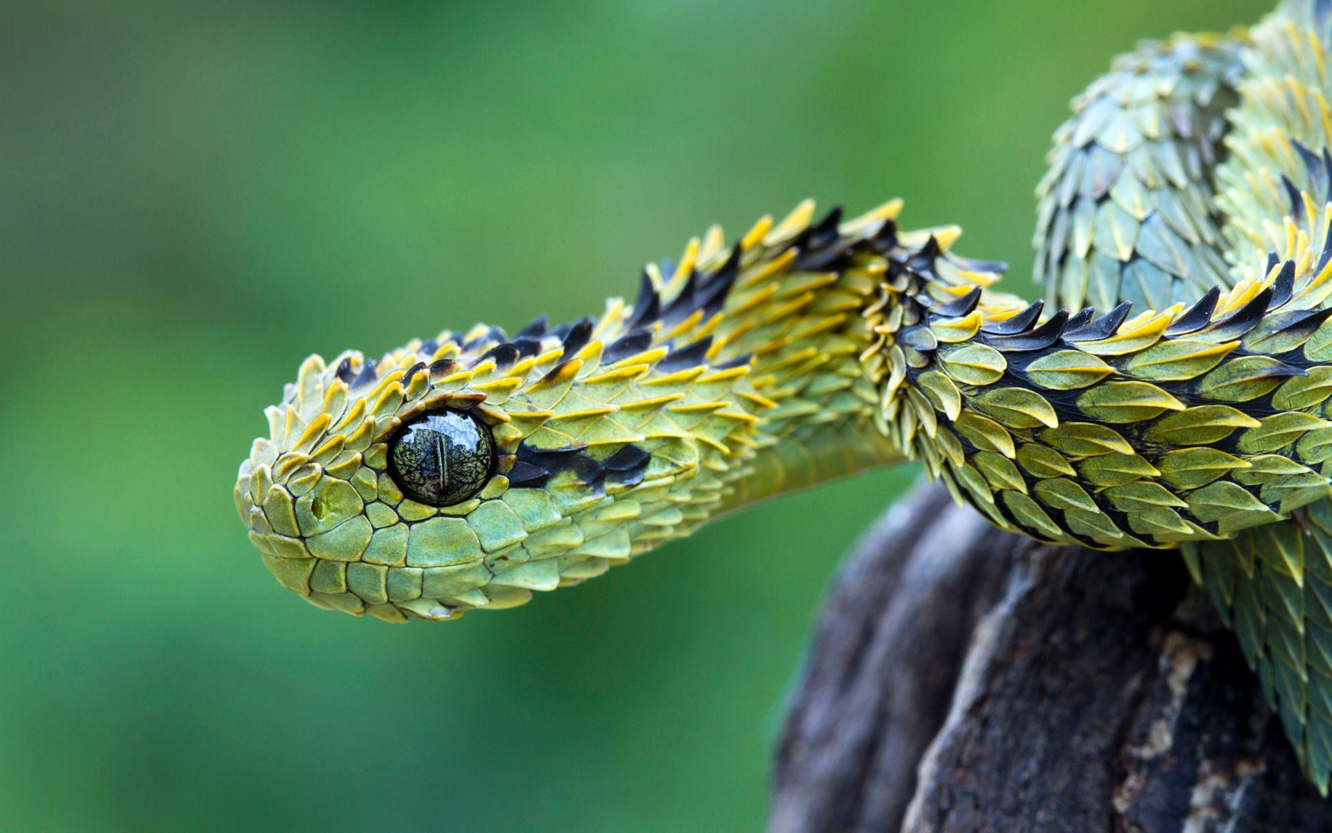 La serpiente viper - 1920x1200