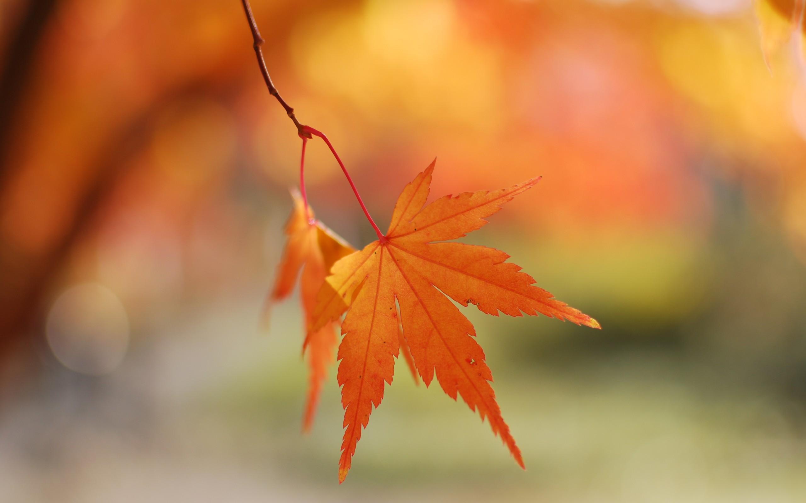Las hojas en otoño - 2560x1600
