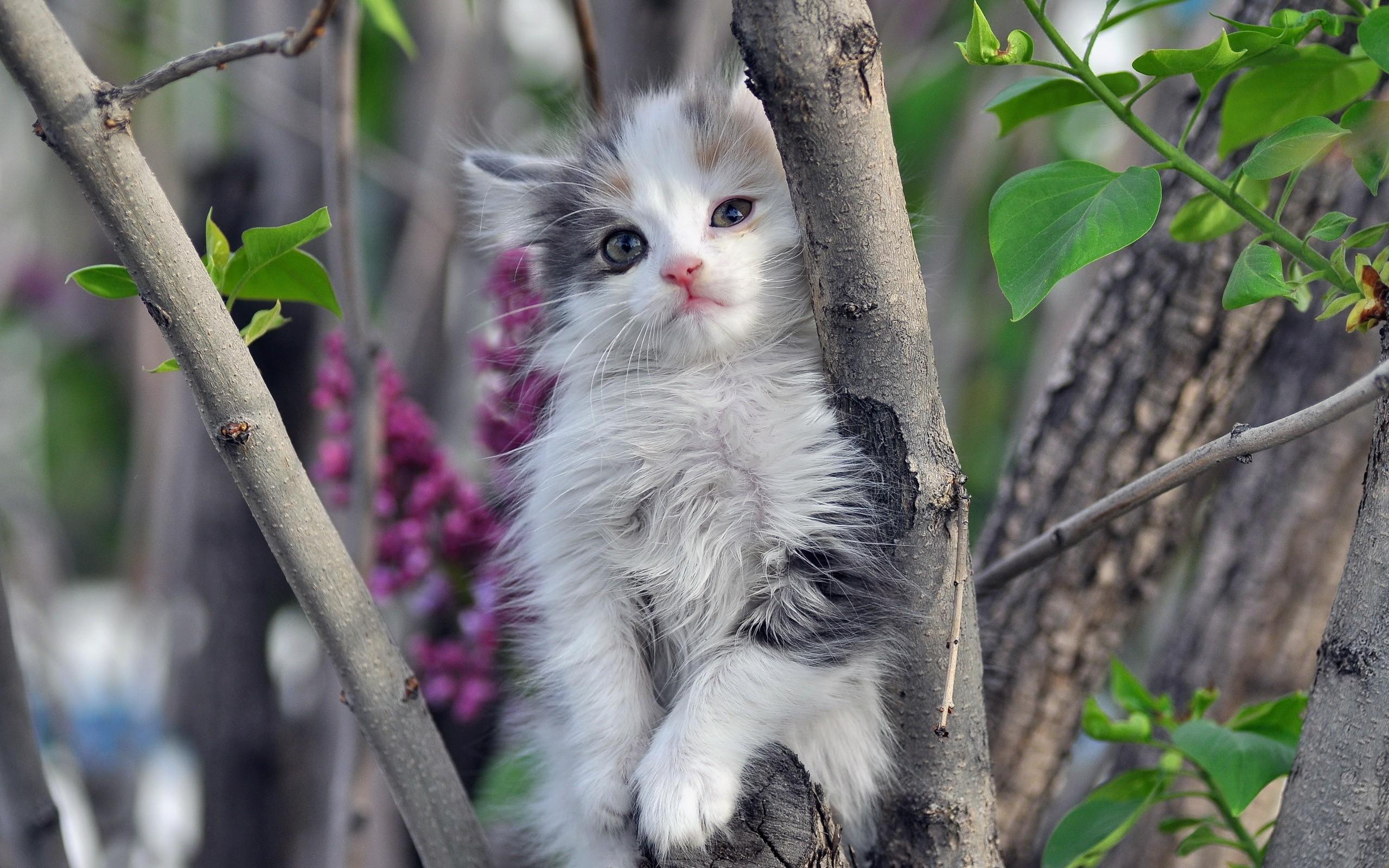 Lindo gatito - 2560x1600