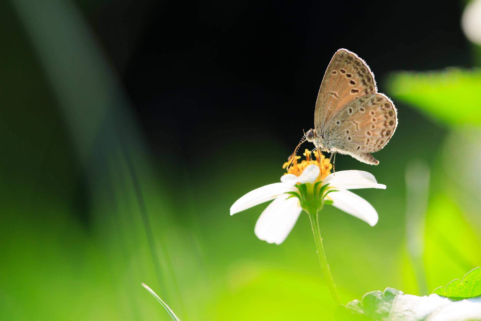Mariposa en fondo verde - 2048x1365