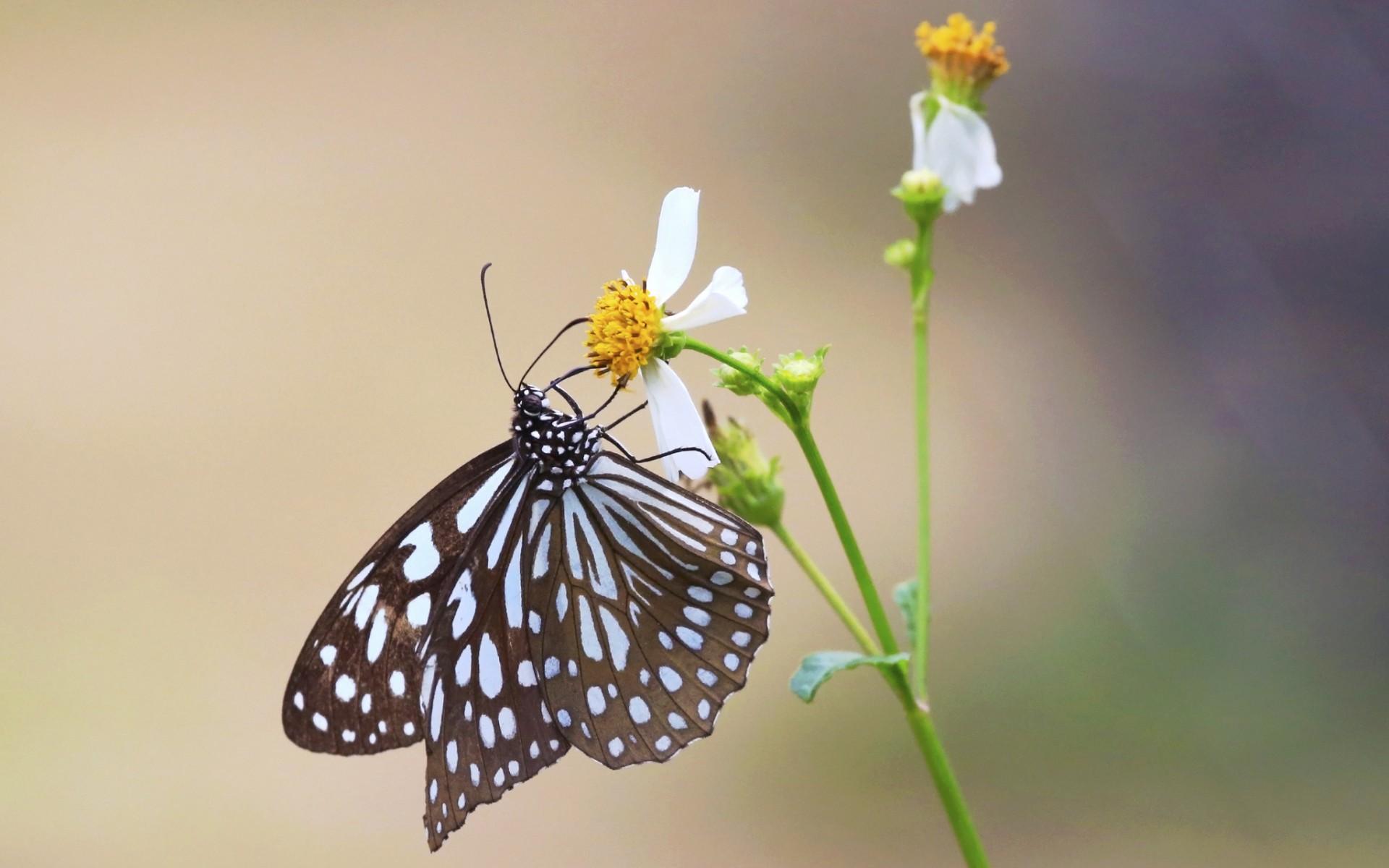 Mariposa y una flor - 1920x1200