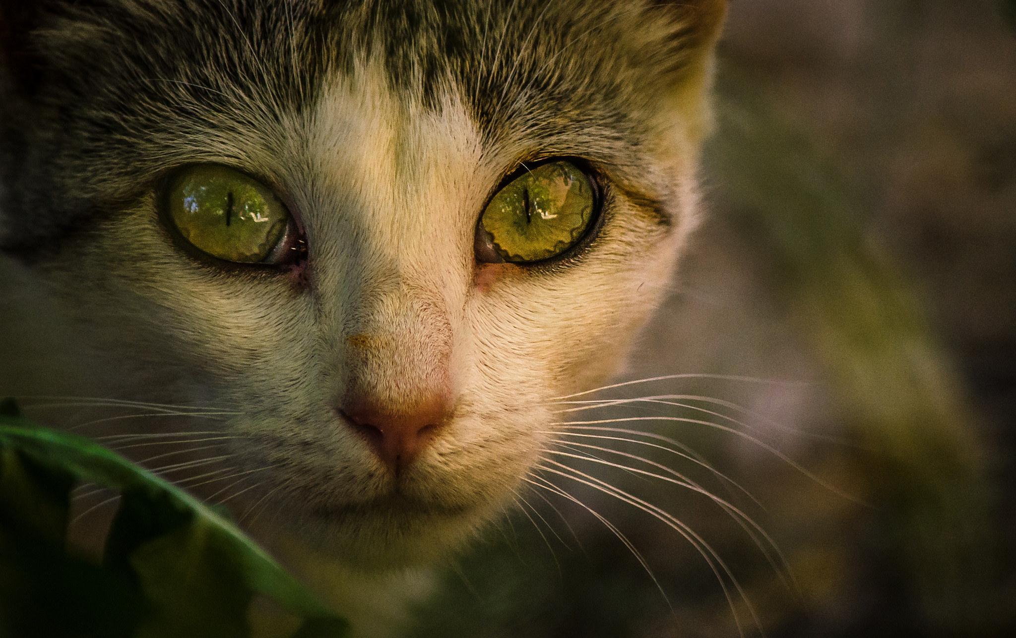 Mirada de un gato - 2048x1287