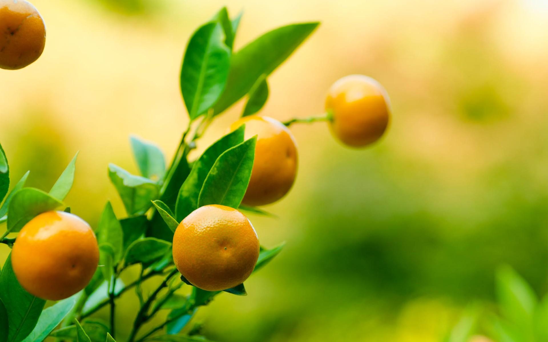 Naranjas - 1920x1200
