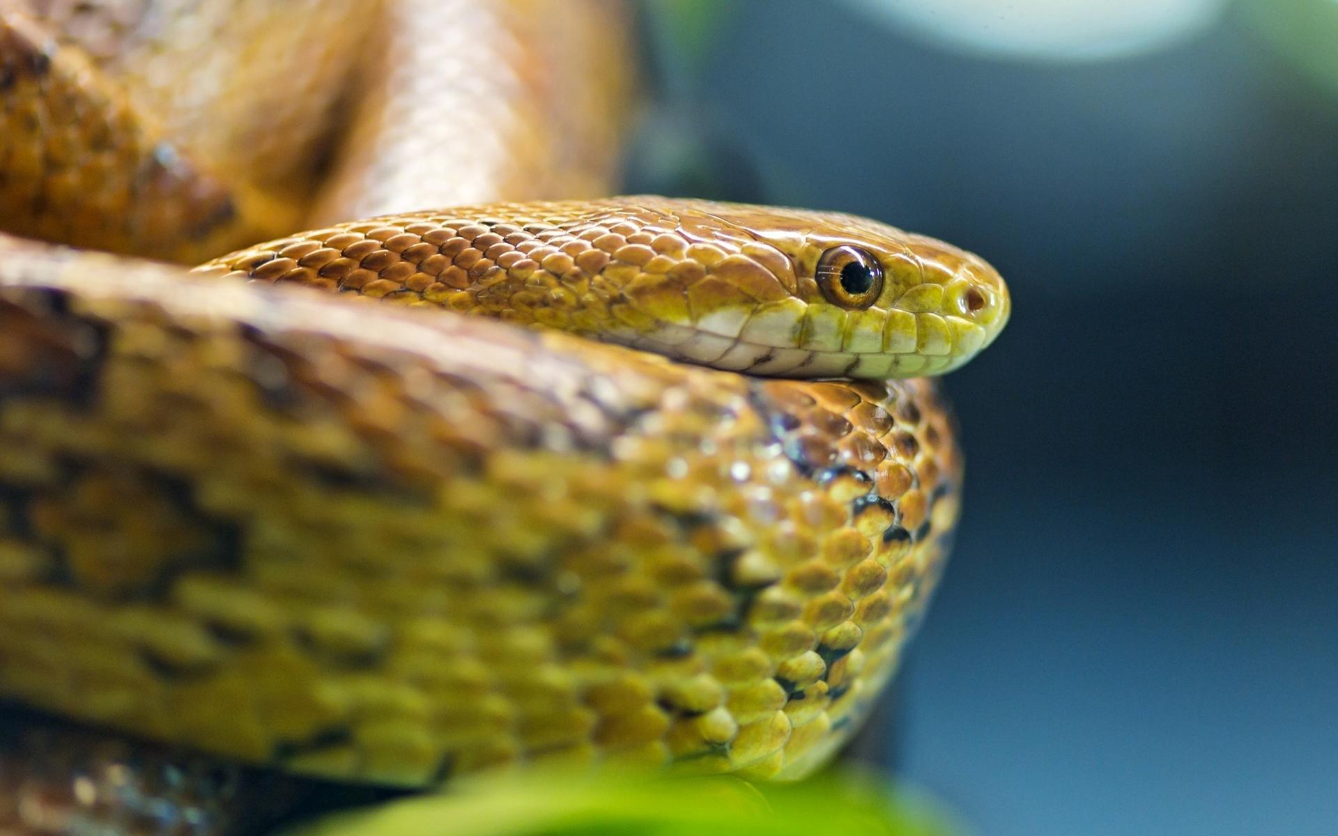 Ojos de serpientes - 1920x1200