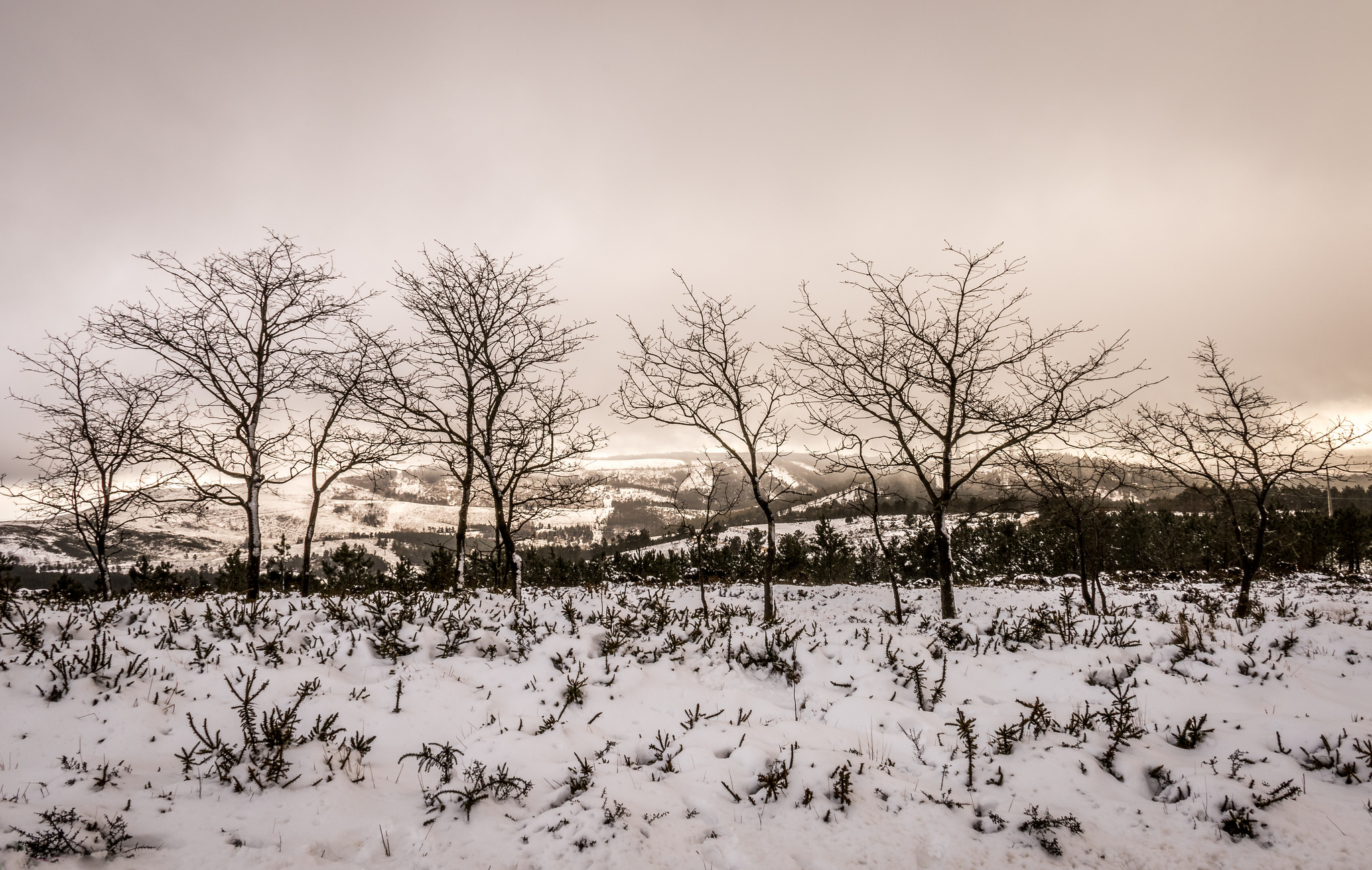 Otoño en las nieves - 2048x1298