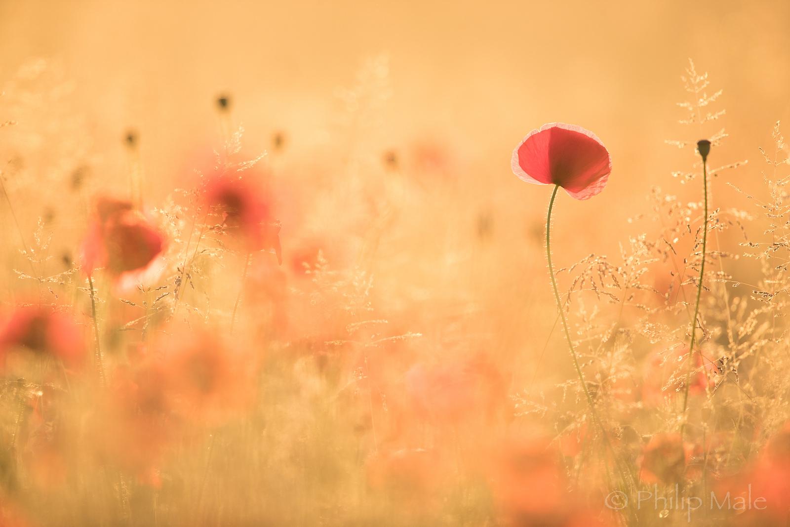 Paisaje con flores - 1600x1067