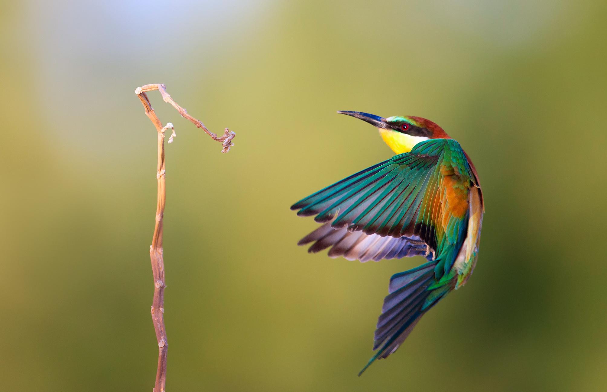 Pájaro de colores - 2008x1299