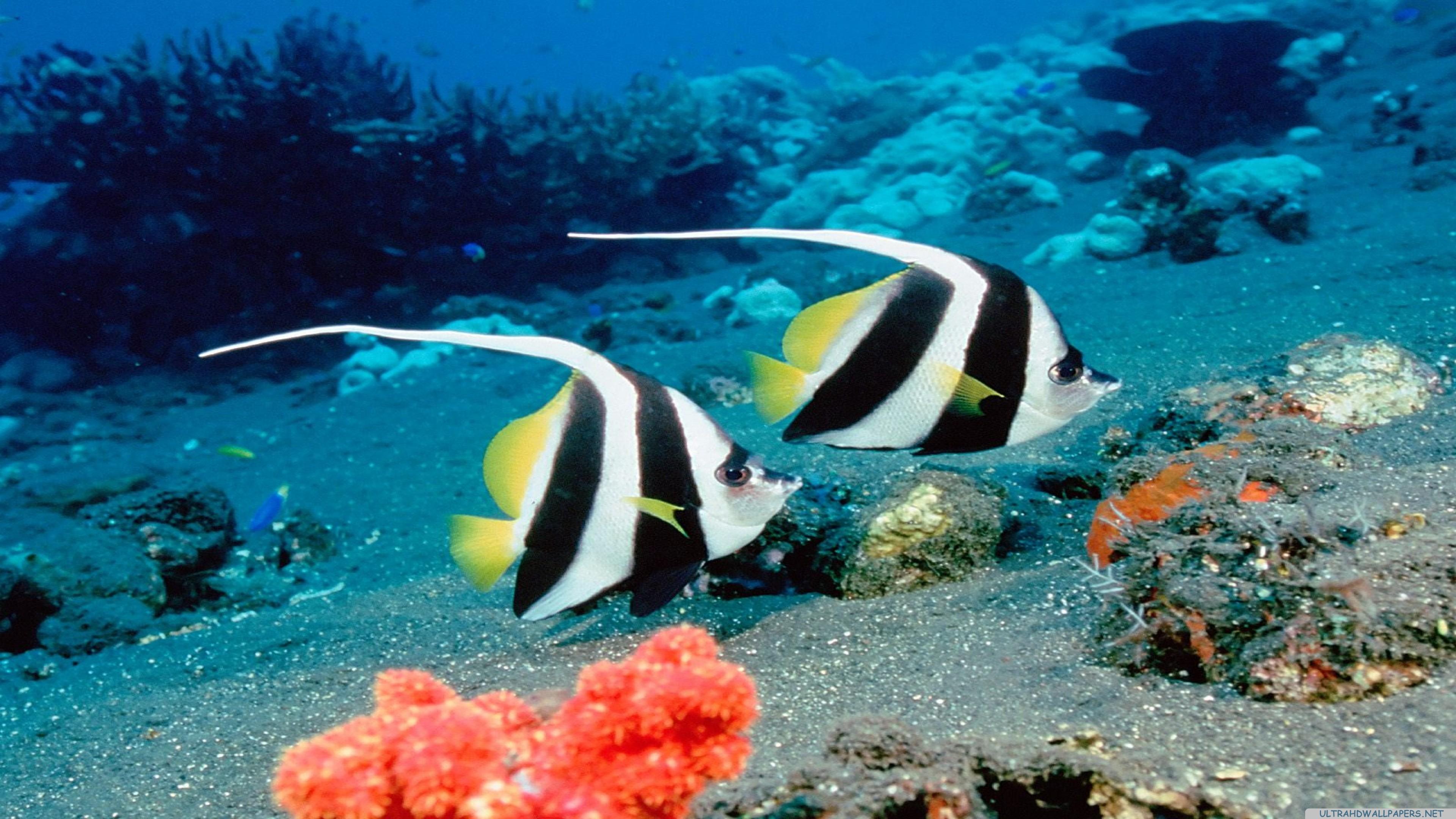 Peces en acuario - 3840x2160