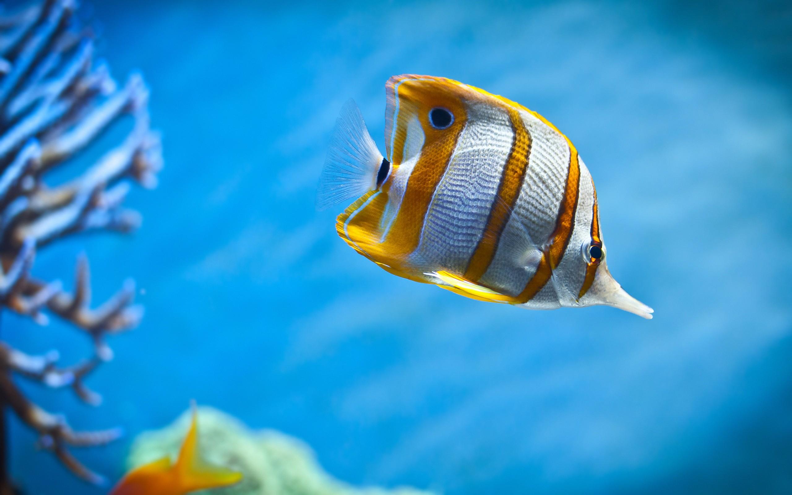Peces hermosos de acuarios - 2560x1600