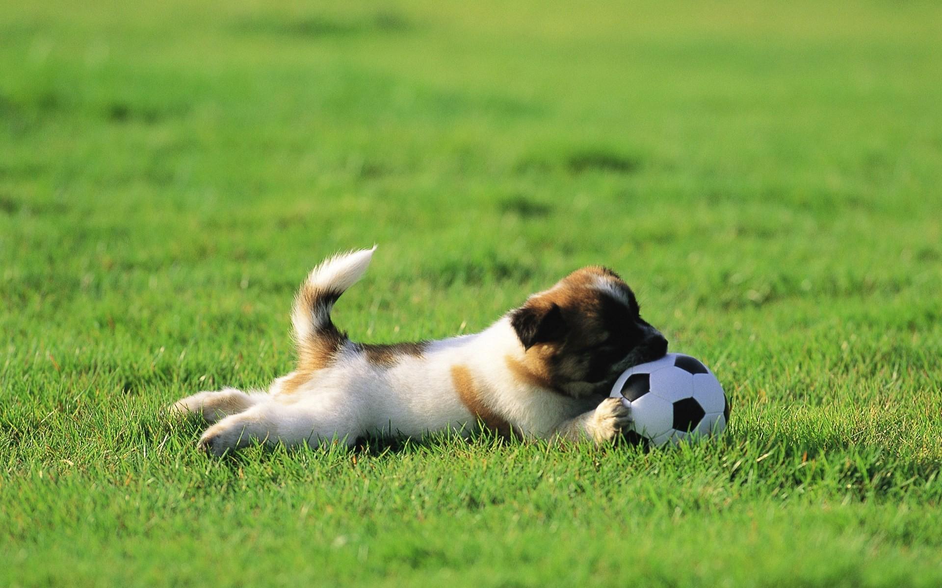 Perro jugando con pelota - 1920x1200