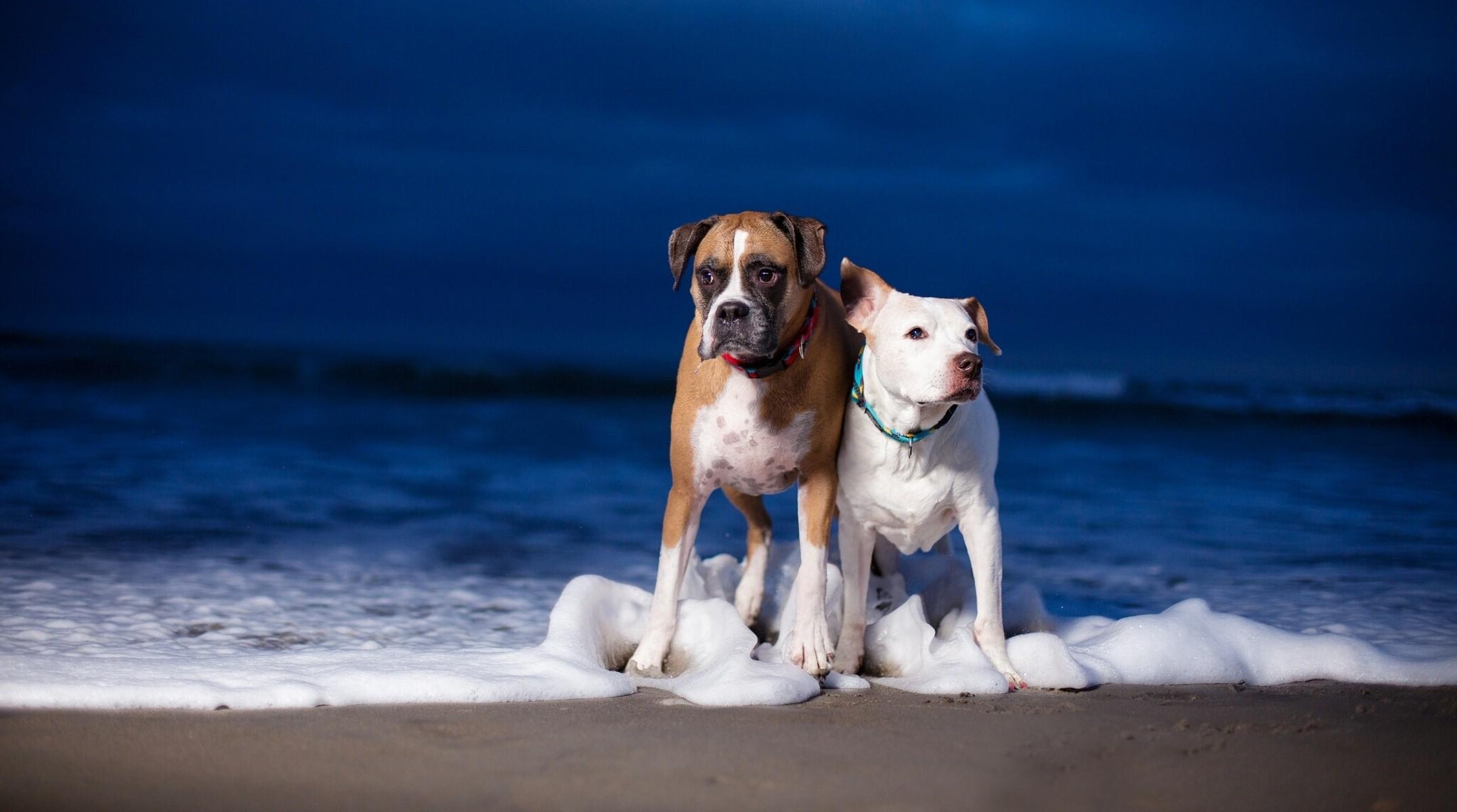 Perros en la playa - 2152x1200