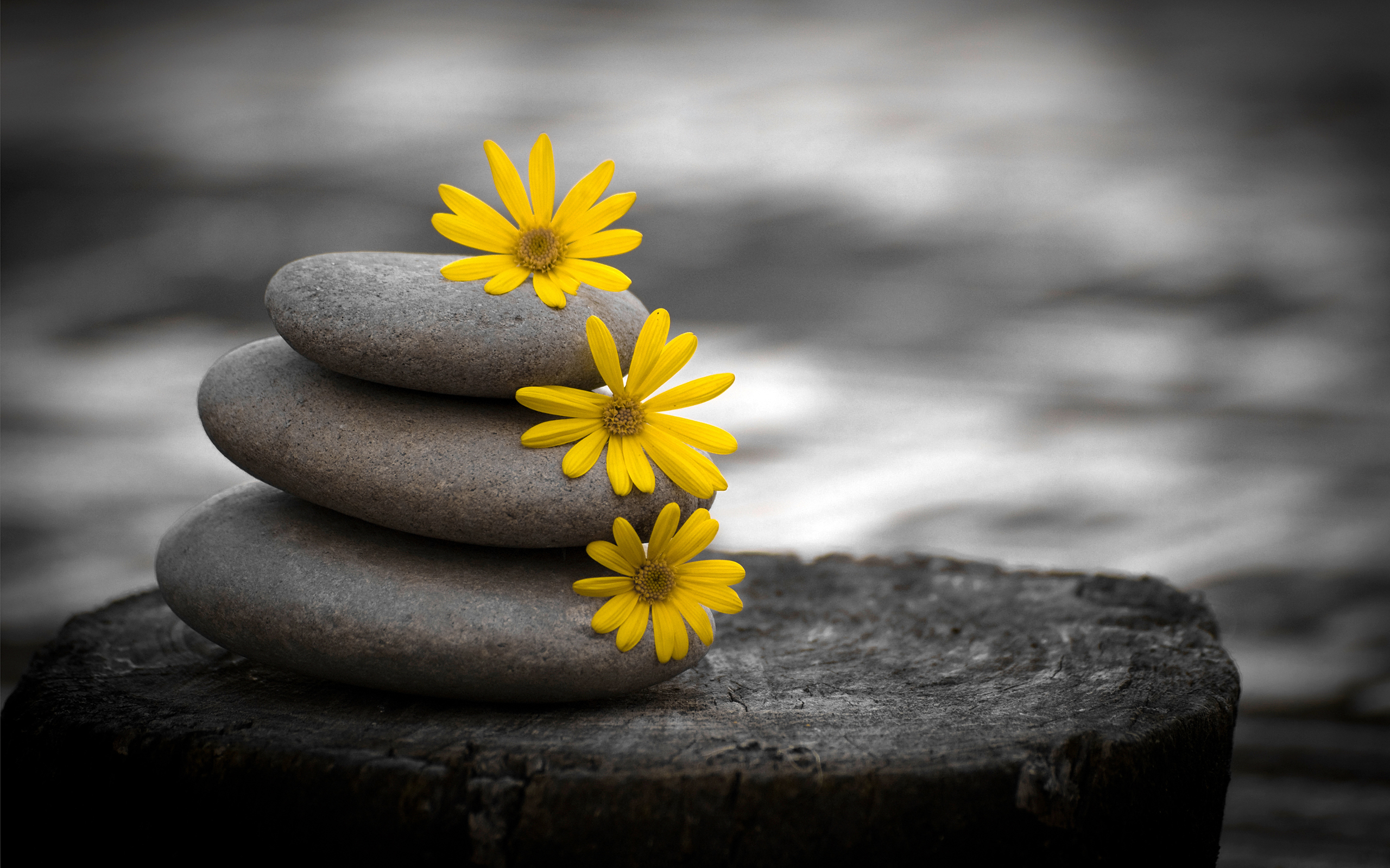 Piedras y flores amarillas - 2560x1600