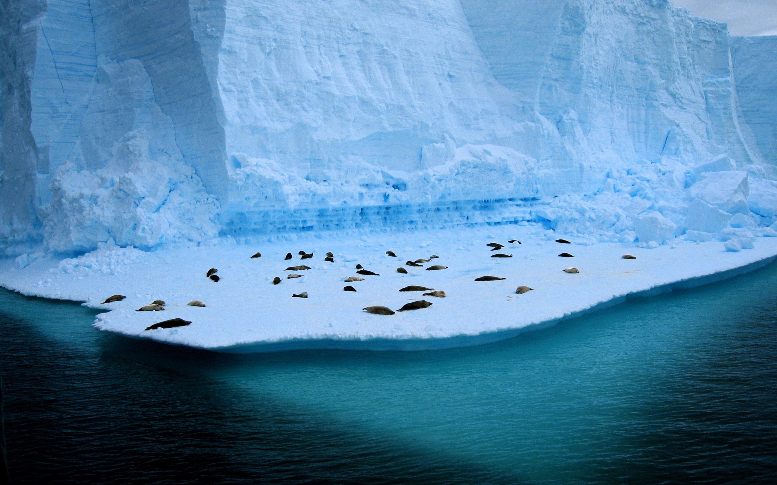 Pinguinos descansando en hielo - 2560x1600