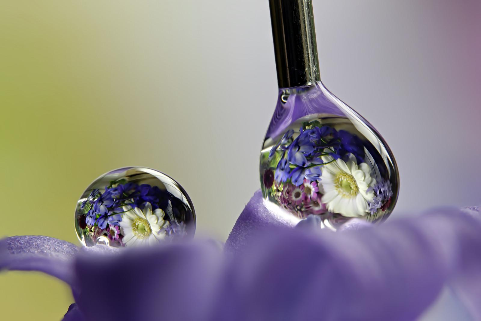 Reflejos de flores en gotas de agua - 1600x1070