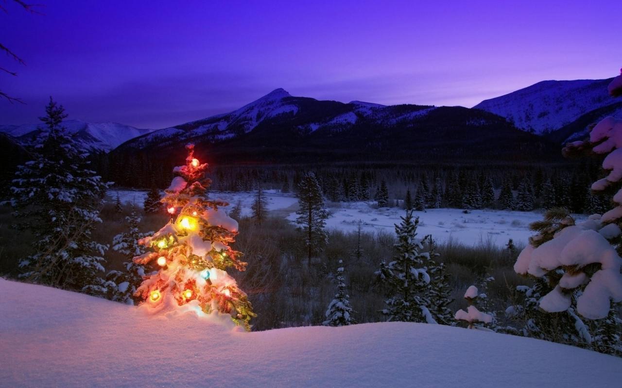 Amanecer con árbol de navidad - 1280x800