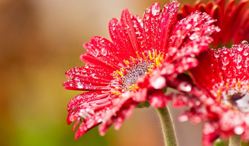 Bella flor roja - 1024x600