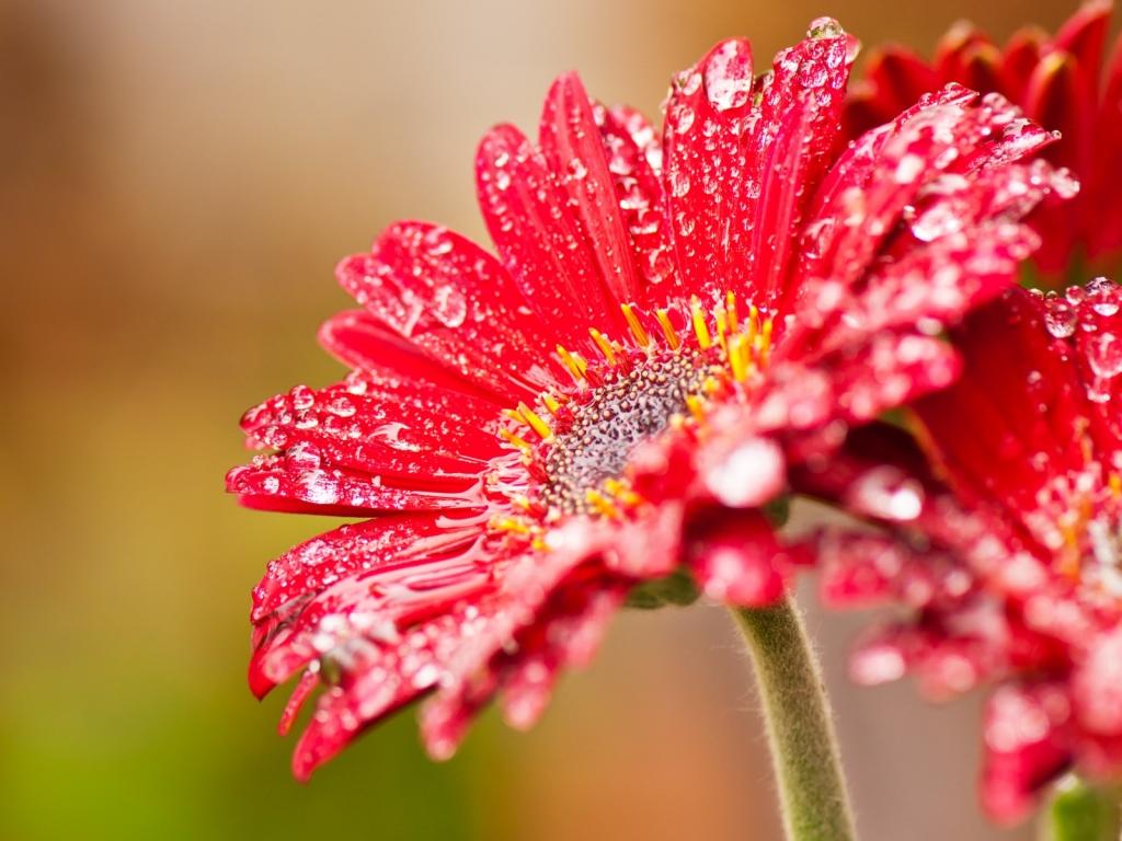 Bella flor roja - 1024x768