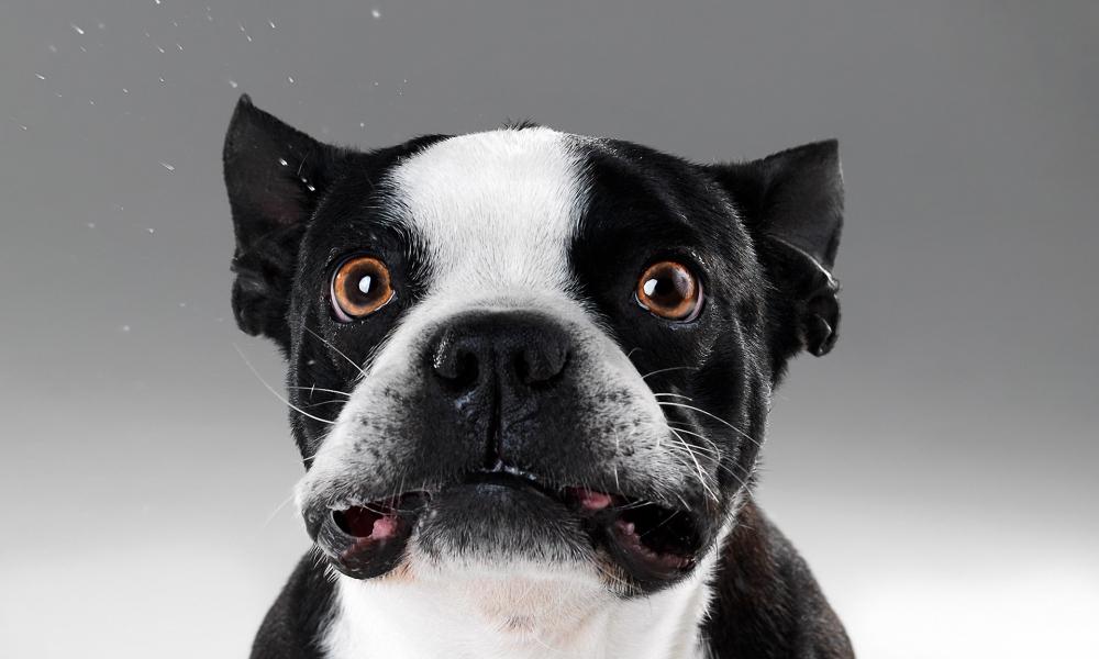 Caras de perros - 1000x600