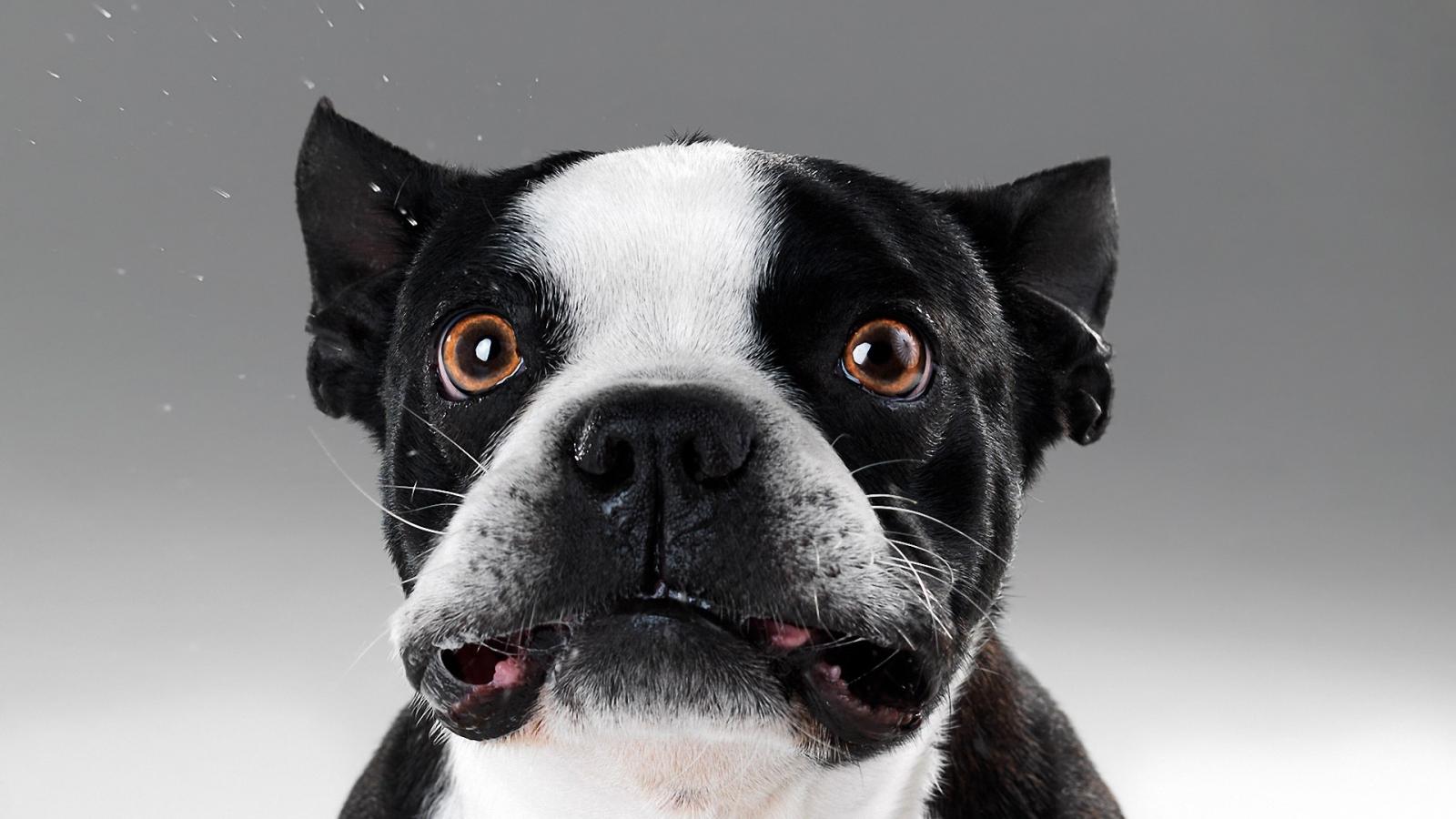 Caras de perros - 1600x900