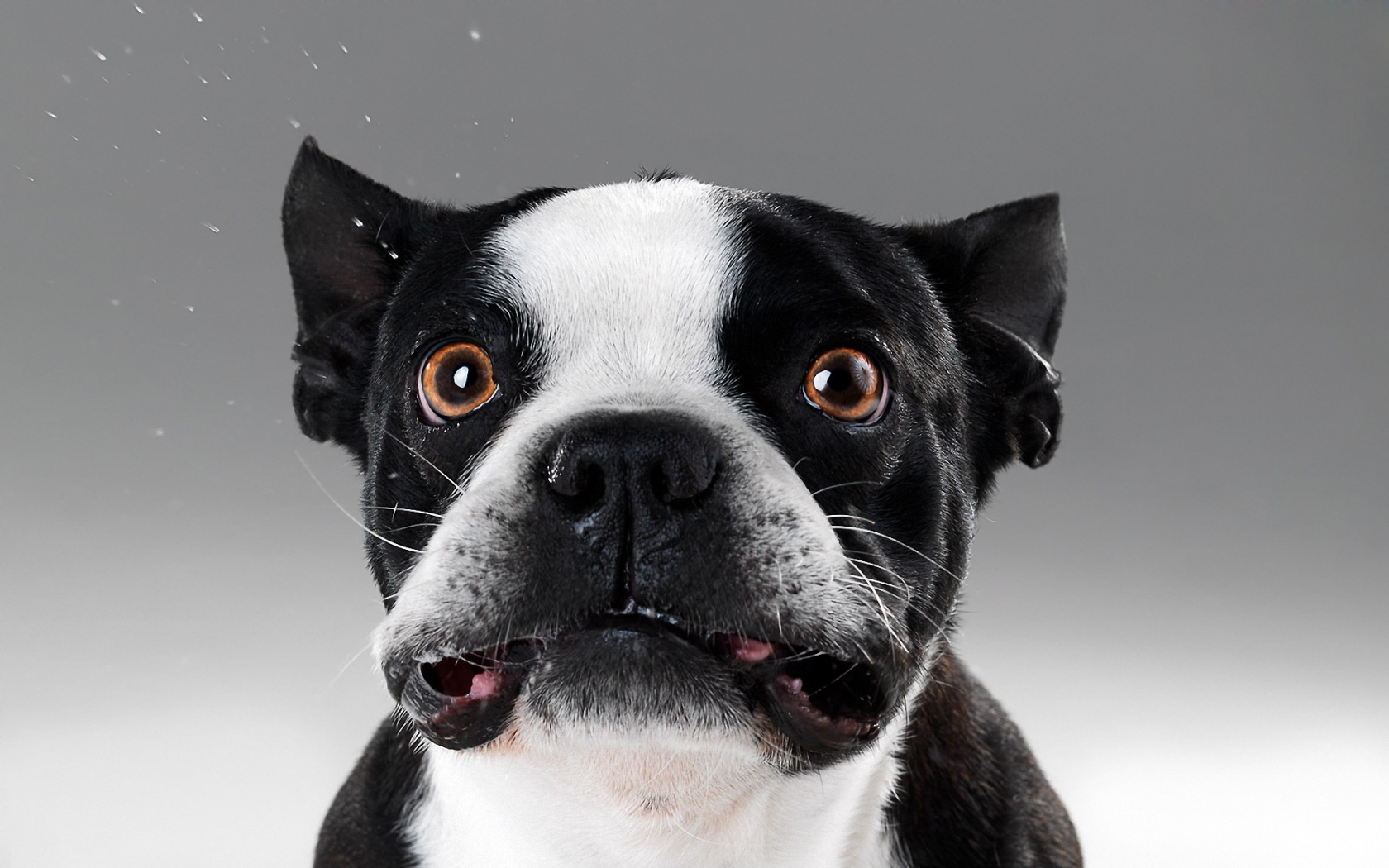 Caras de perros - 1680x1050