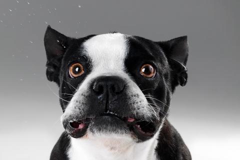 Caras de perros - 480x320