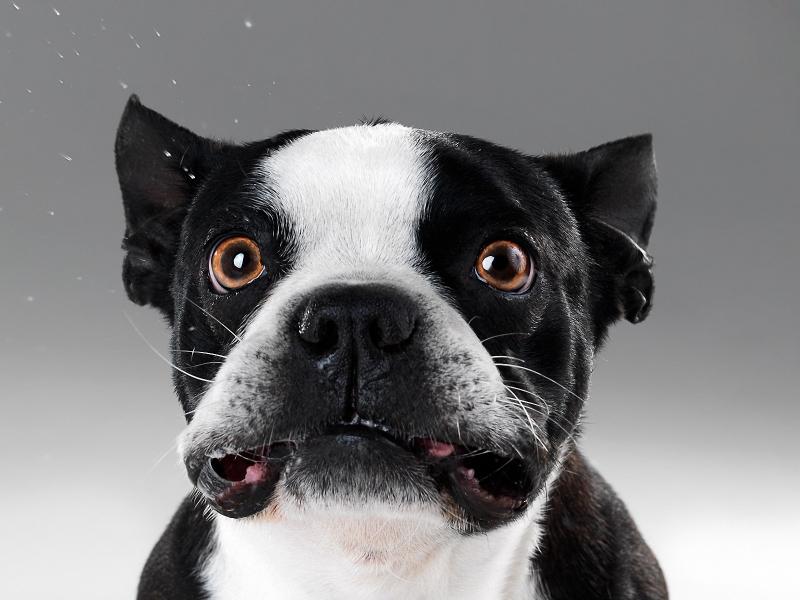 Caras de perros - 800x600