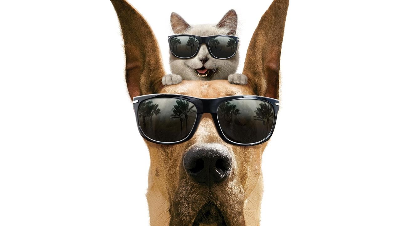 Como perros y gatos - 1280x720