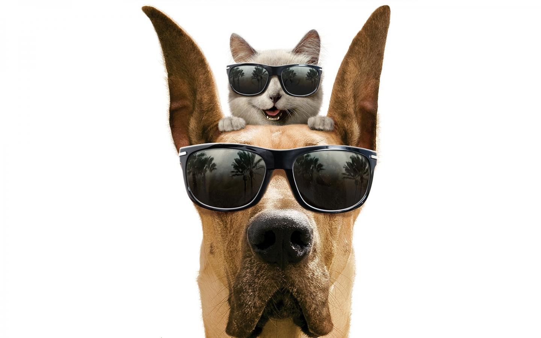Como perros y gatos - 1440x900