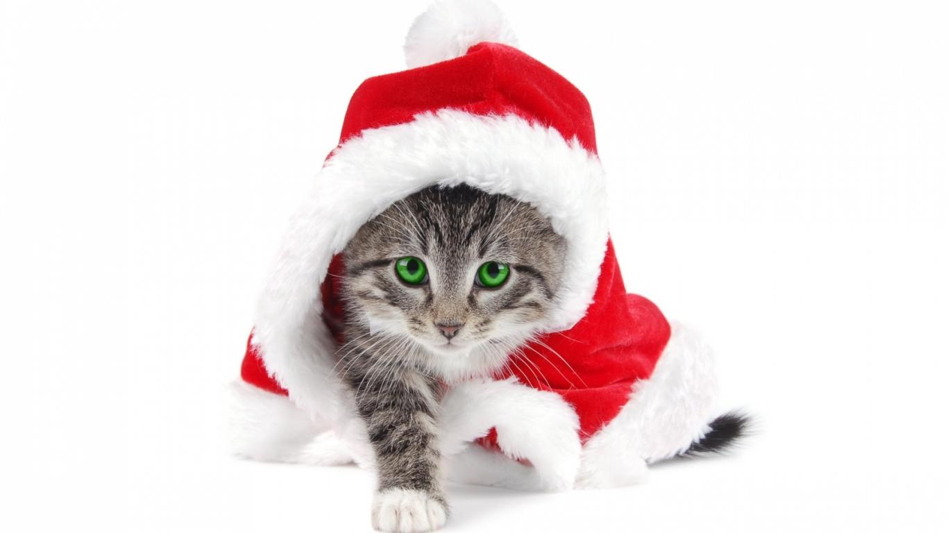 El gato Santa Claus - 1366x768