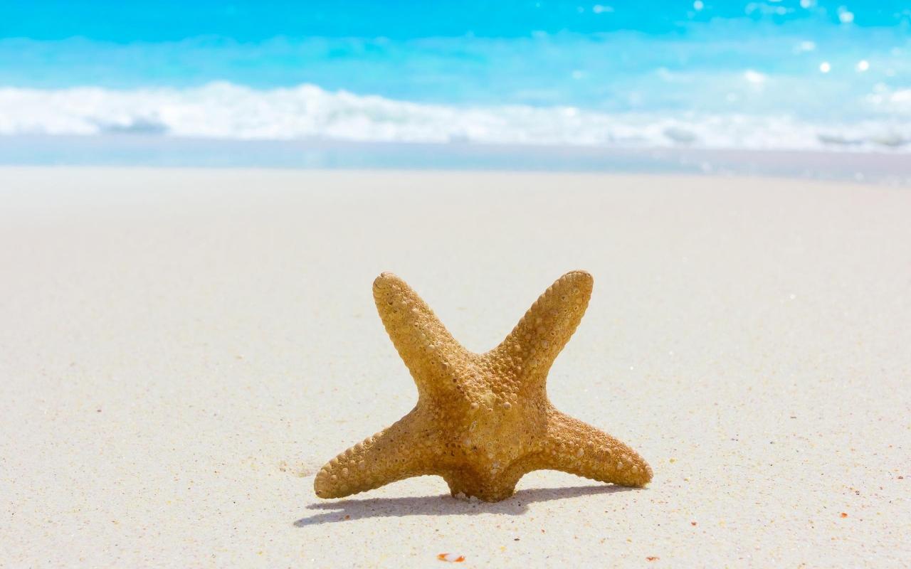 Estrella de mar en la playa - 1280x800