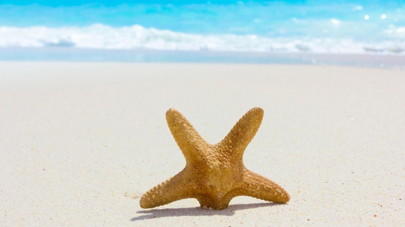 Estrella de mar en la playa - 1366x768