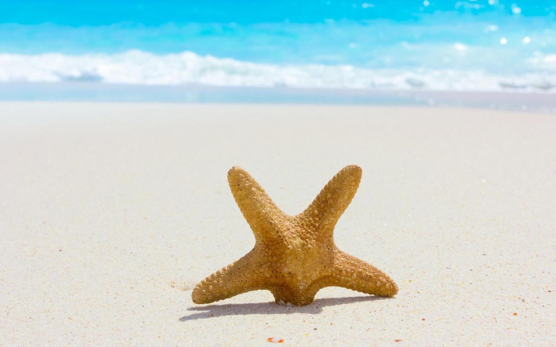 Estrella de mar en la playa - 1440x900
