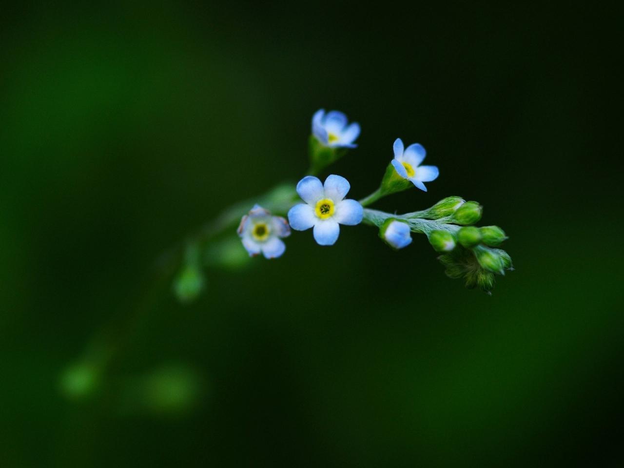 Flores en miniaturas - 1280x960