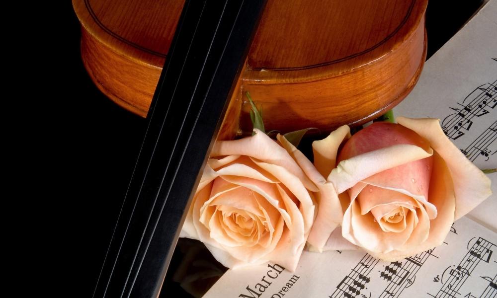 Flores rosadas y violin - 1000x600