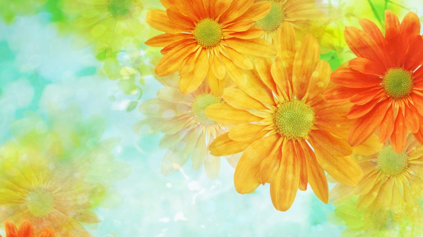 Fondo con hermosas flores - 1366x768